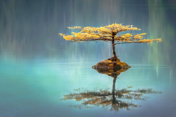 The I Ching: From Ancient China to Your Acupuncture Appointment